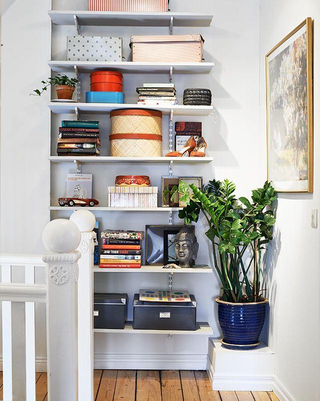 Máme rádi pokojovky aneb květiny v bytě-domě - Obrázek č. 80