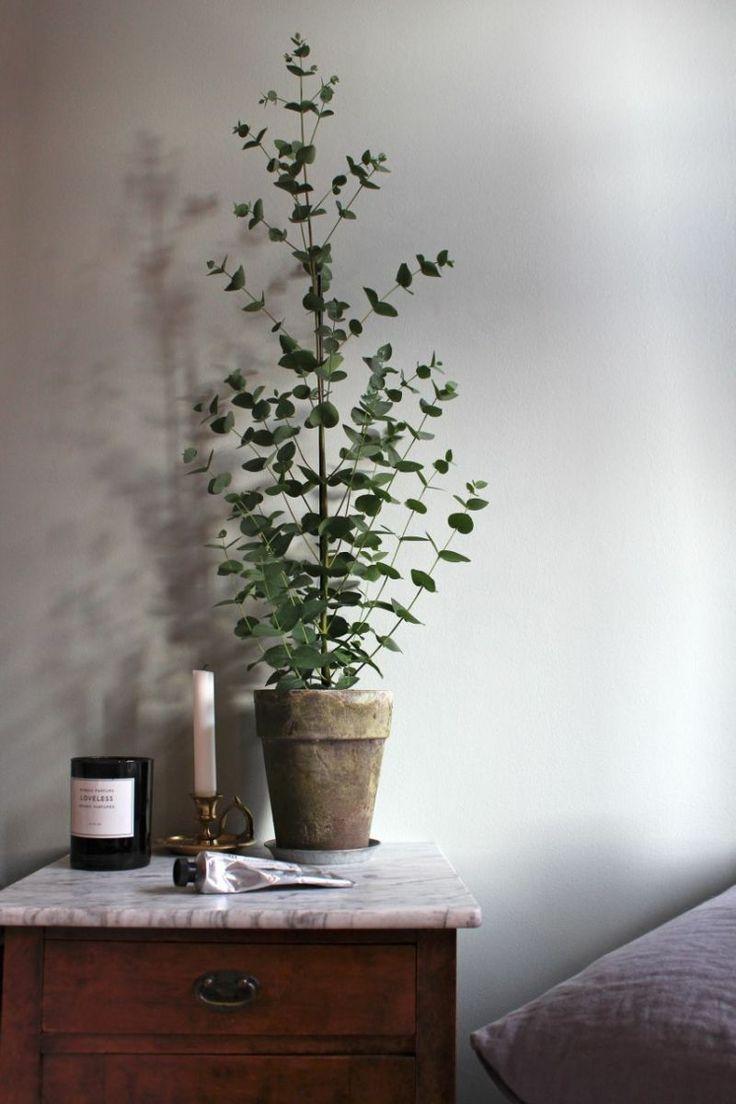 Máme rádi pokojovky aneb květiny v bytě-domě - Obrázek č. 84