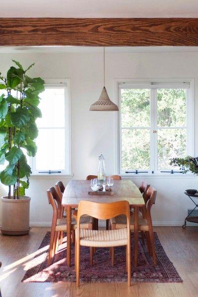 Máme rádi pokojovky aneb květiny v bytě-domě - Obrázek č. 86