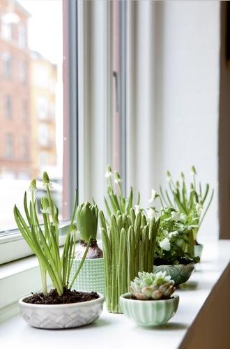 Máme rádi pokojovky aneb květiny v bytě-domě - Obrázek č. 95
