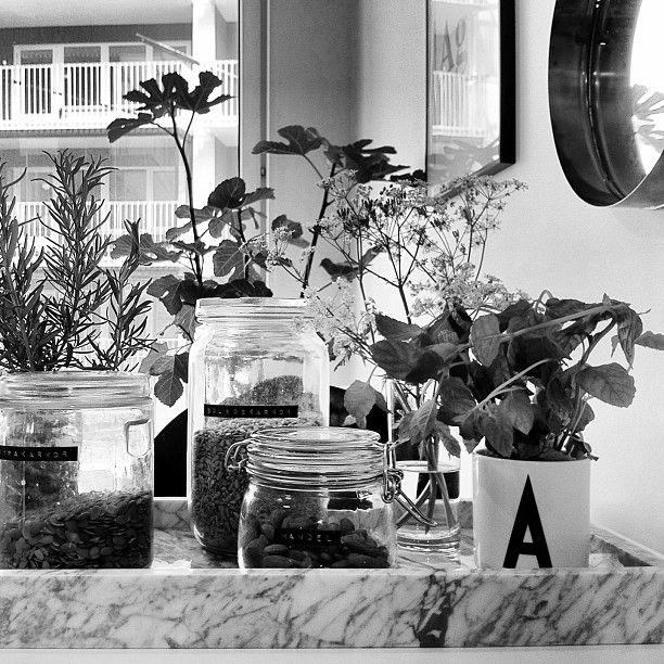 Máme rádi pokojovky aneb květiny v bytě-domě - Obrázek č. 99