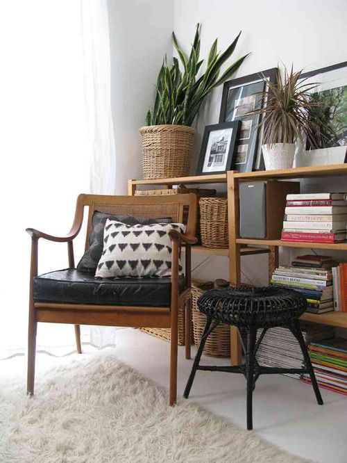 Máme rádi pokojovky aneb květiny v bytě-domě - Obrázek č. 100