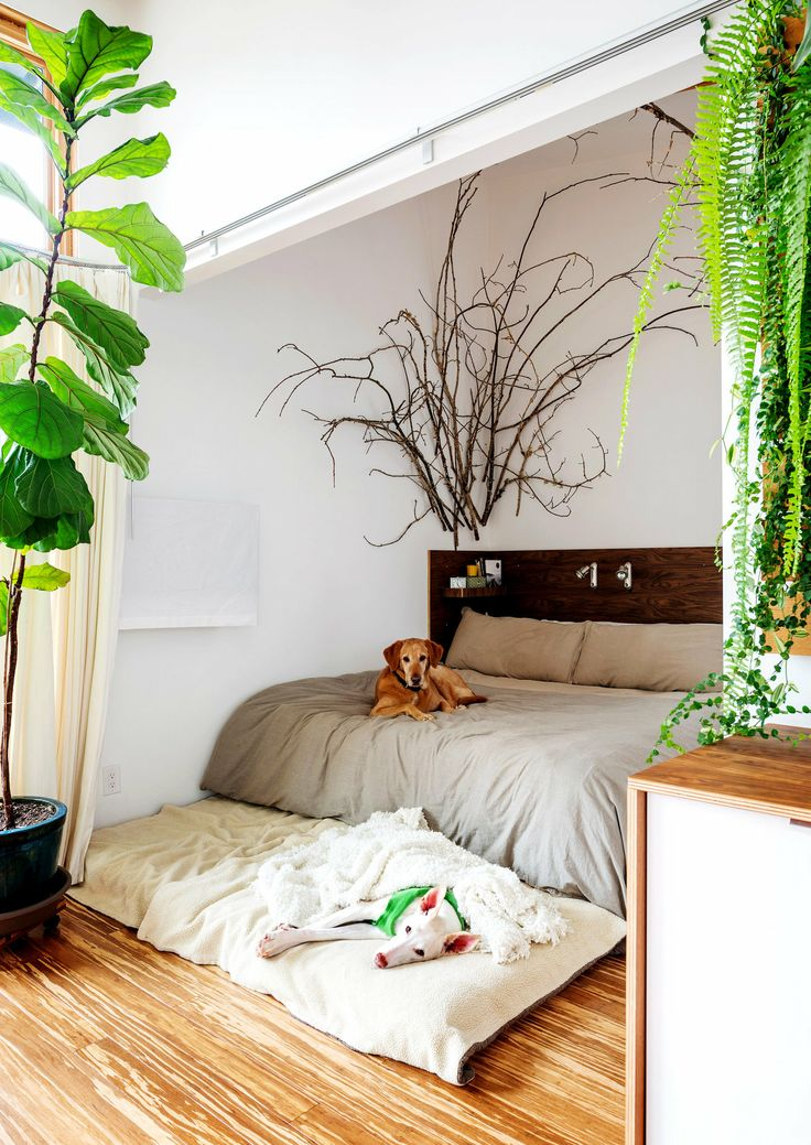 Máme rádi pokojovky aneb květiny v bytě-domě - Obrázek č. 162