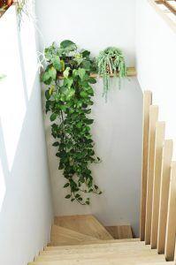Máme rádi pokojovky aneb květiny v bytě-domě - Obrázek č. 679