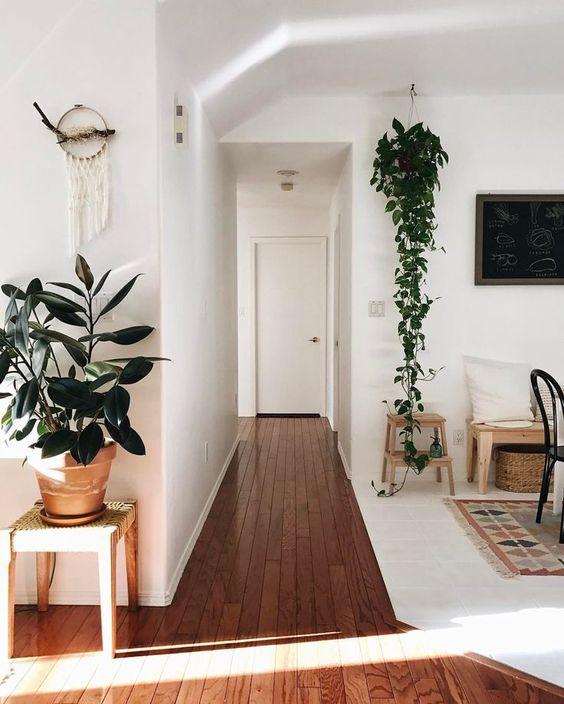 Máme rádi pokojovky aneb květiny v bytě-domě - Obrázek č. 680