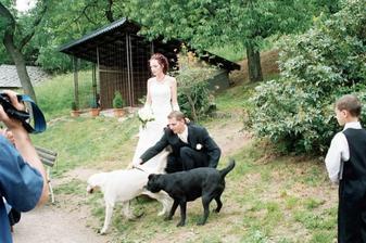 Naši dva chlupáčci na svatbě nesměli chybět :o))