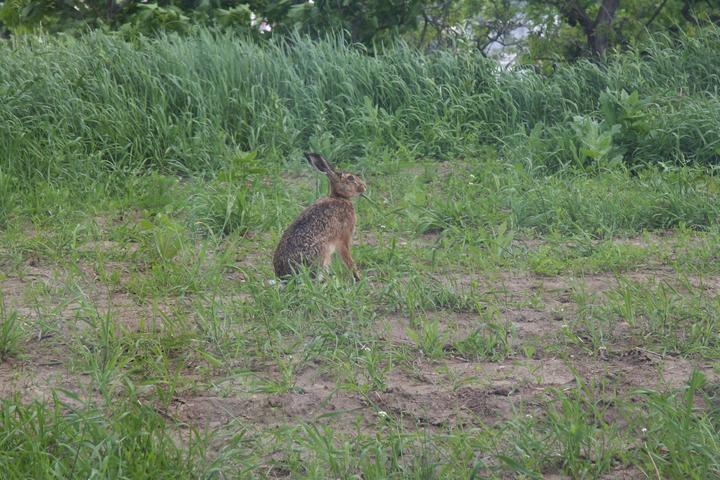 Příroda kolem nás - Místo zahrady máme zatím džungli, ale zvířátkům se u nás líbí :-)