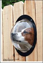 aby aj pes videl čo sa deje vonku