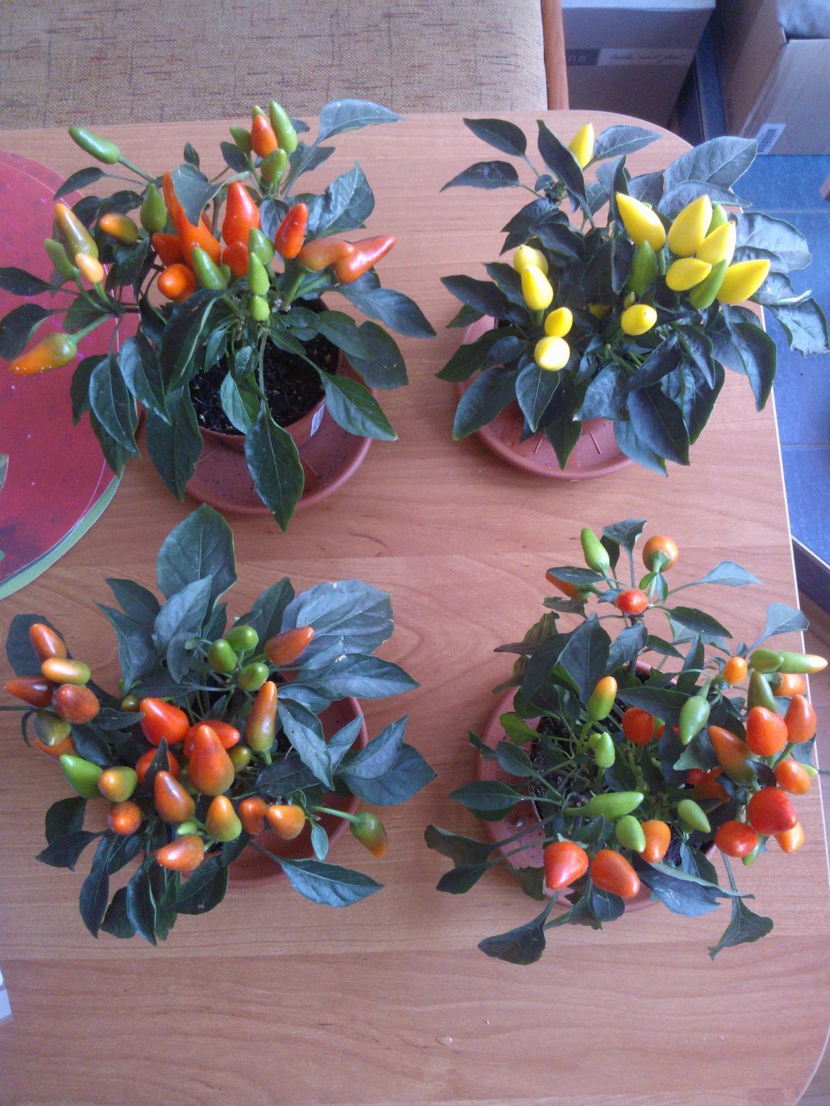 Pokus s vodou - Den 18 - všechny už jsou krásně barevné :-) to že je jedna žlutá je způsobeno druhem rostlinky, nikoliv druhem vody..