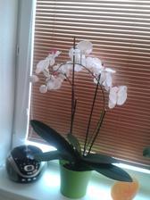 Zamaskovana odkvitnuta orchidea .. kvietky su umele :)