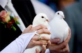 Čo už máme - ešteže otec je holubiar :D už ich asi aj trenuje :DD