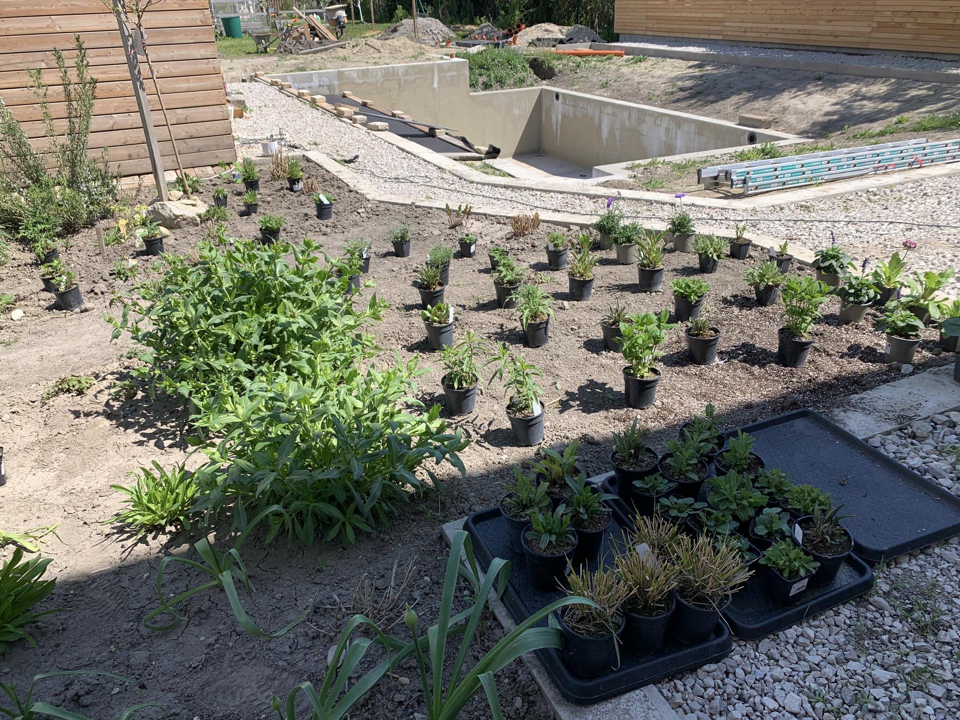 Prírodné bývanie a jedlá záhrada s biobazénom - Obrázok č. 1282