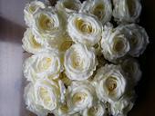 Velké květy smetanových růží průměr 9cm,
