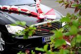 Dvojitá šerpa s umělými růžemi, na výzdobu svatebního auta. Drží přísavkami, které jsou součástí