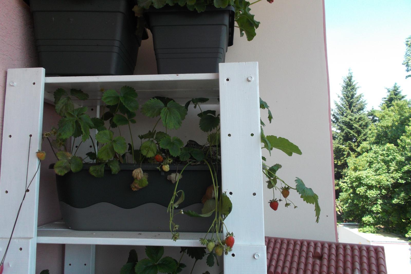 Moje jahody :) - Obrázok č. 4