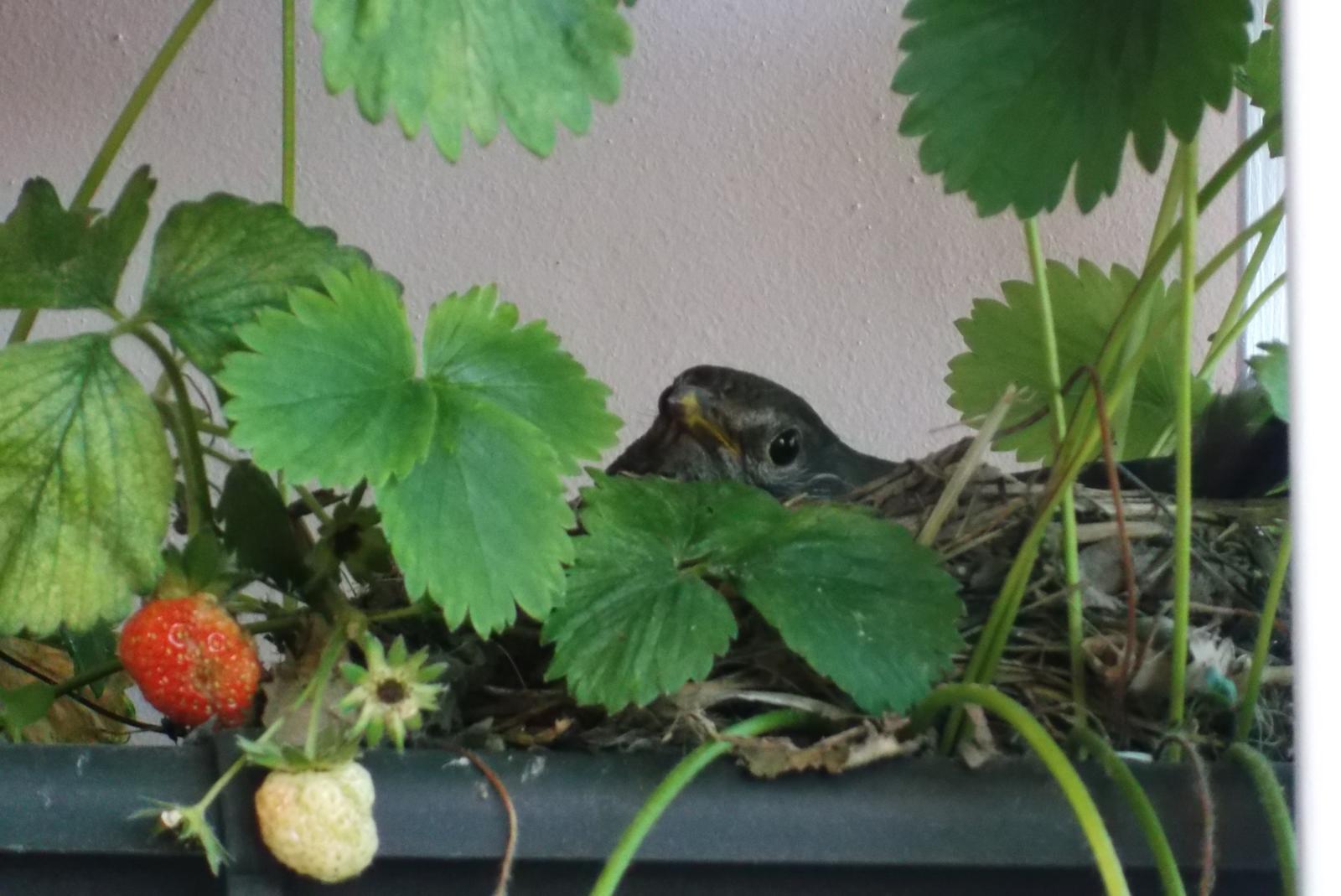 Moje jahody :) - Obrázok č. 5