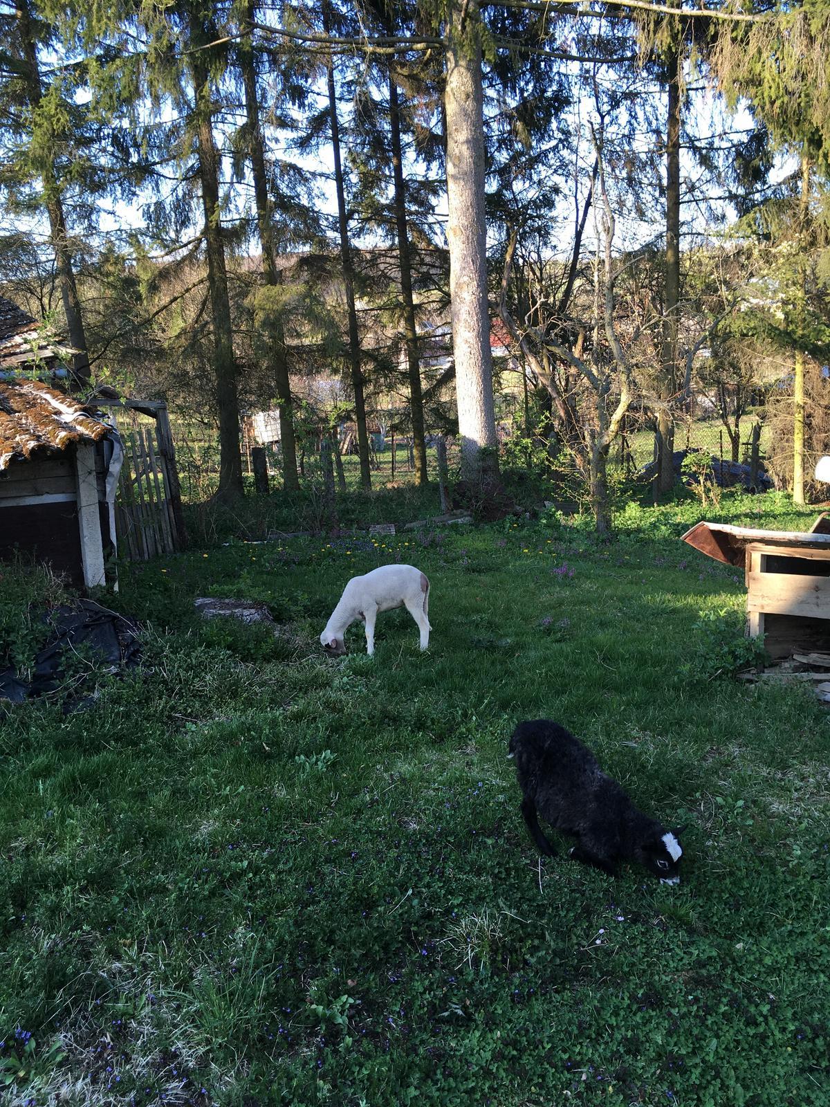 Perníková chalúpka - kosačky na trávu, model 1-2020