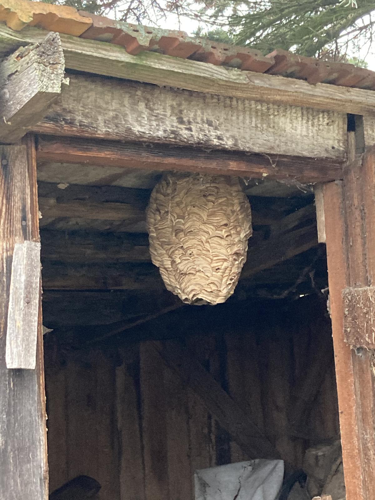 Dom - aha aké krásne hniezdo som našla 😱