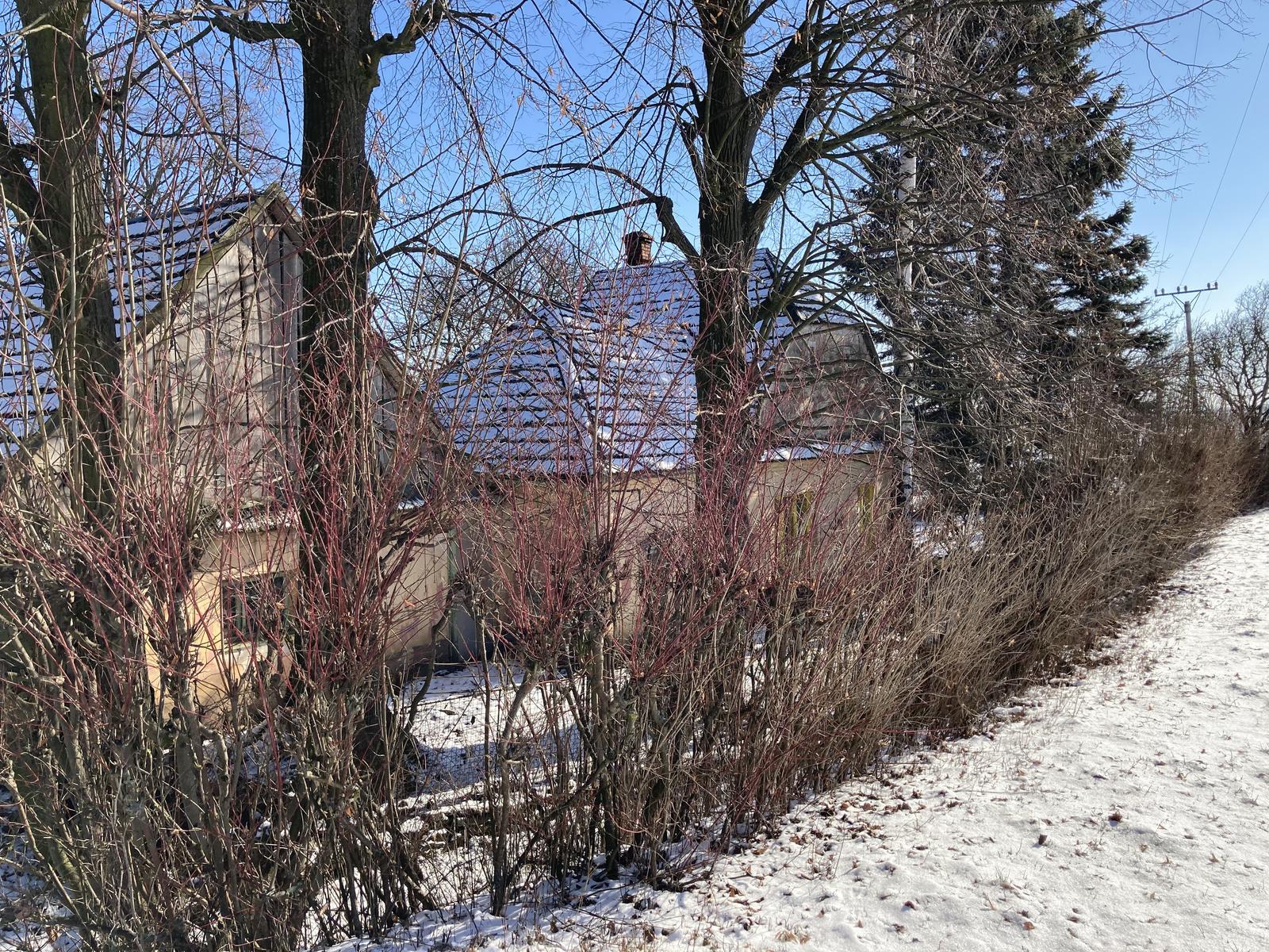 Dom - ..tie stromy musím hneď ako nebude mrznúť ostrihať...