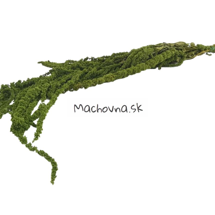 machovna_sk - Obrázok č. 8