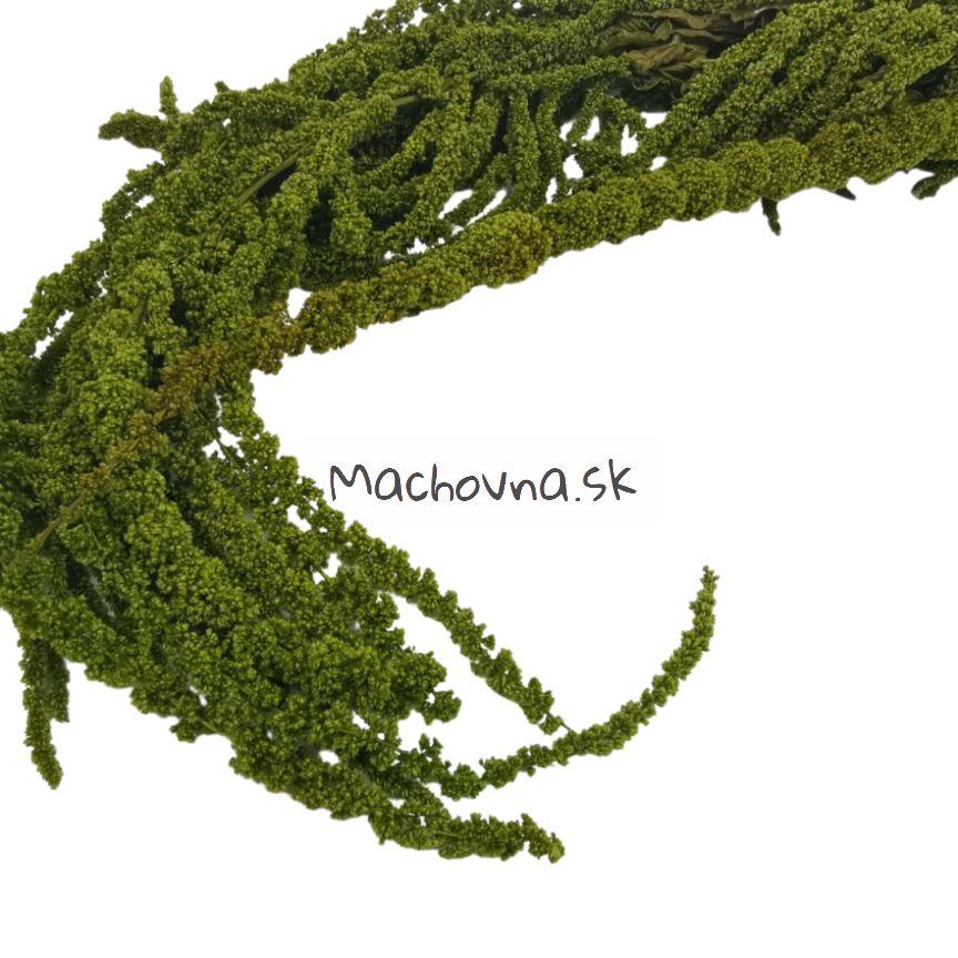 machovna_sk - Obrázok č. 7