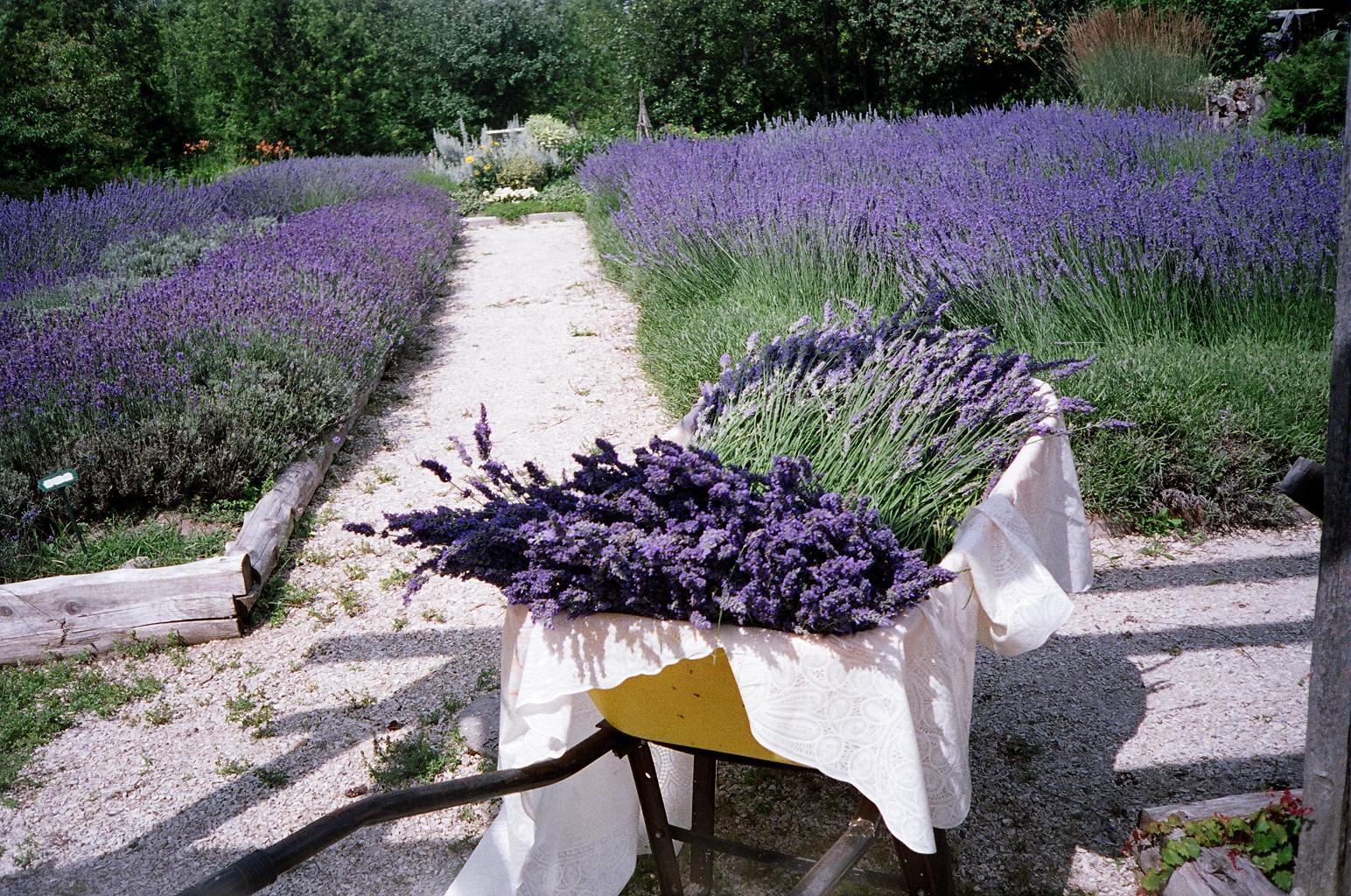 Lavender Garden - Obrázek č. 1