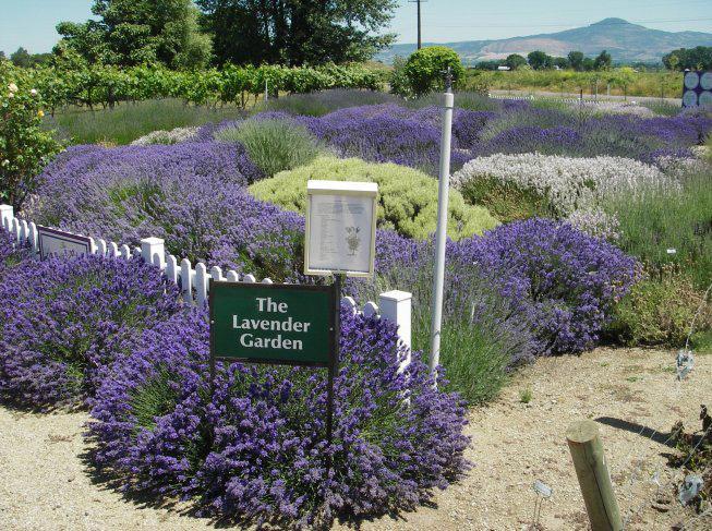 Lavender Garden - Obrázek č. 2