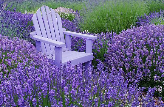 Lavender Garden - Obrázek č. 3