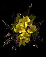 se žlutou alstromerii