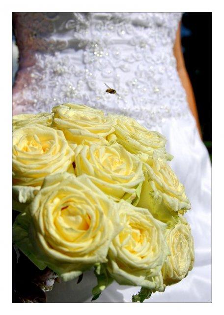 A{{_AND_}}R - včielka - gratulantka