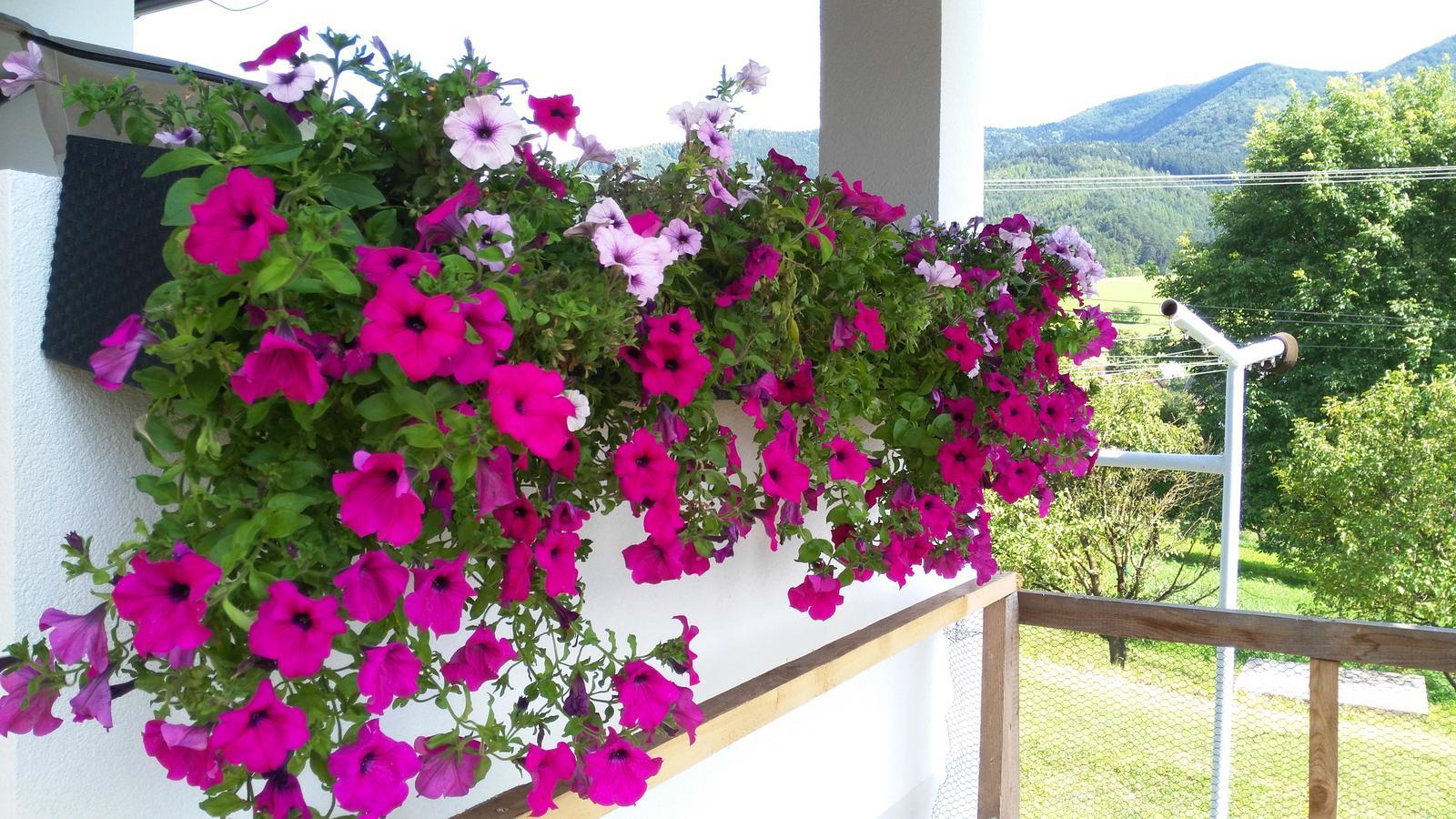 Domček na kopčeku - moje kvetenky som rada že su take ake su pri tom našom vetre....