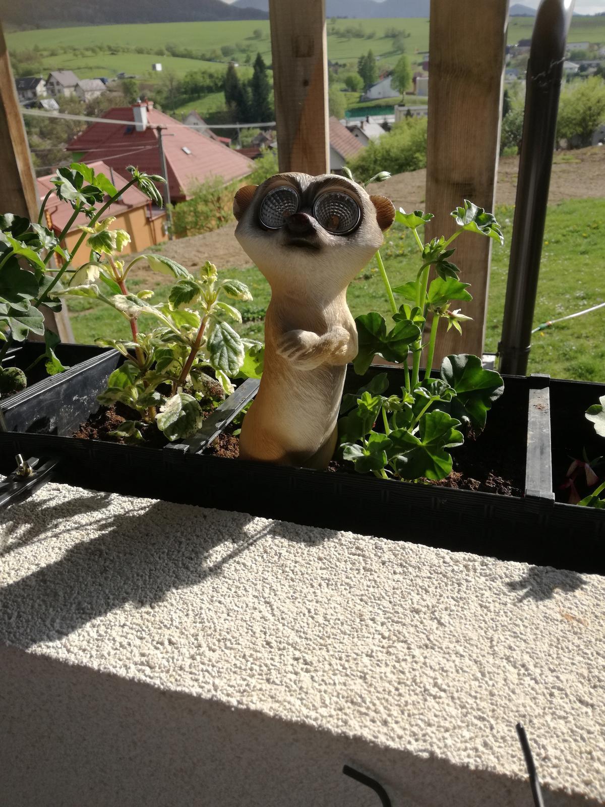 Domček na kopčeku - surikata-neodolala som