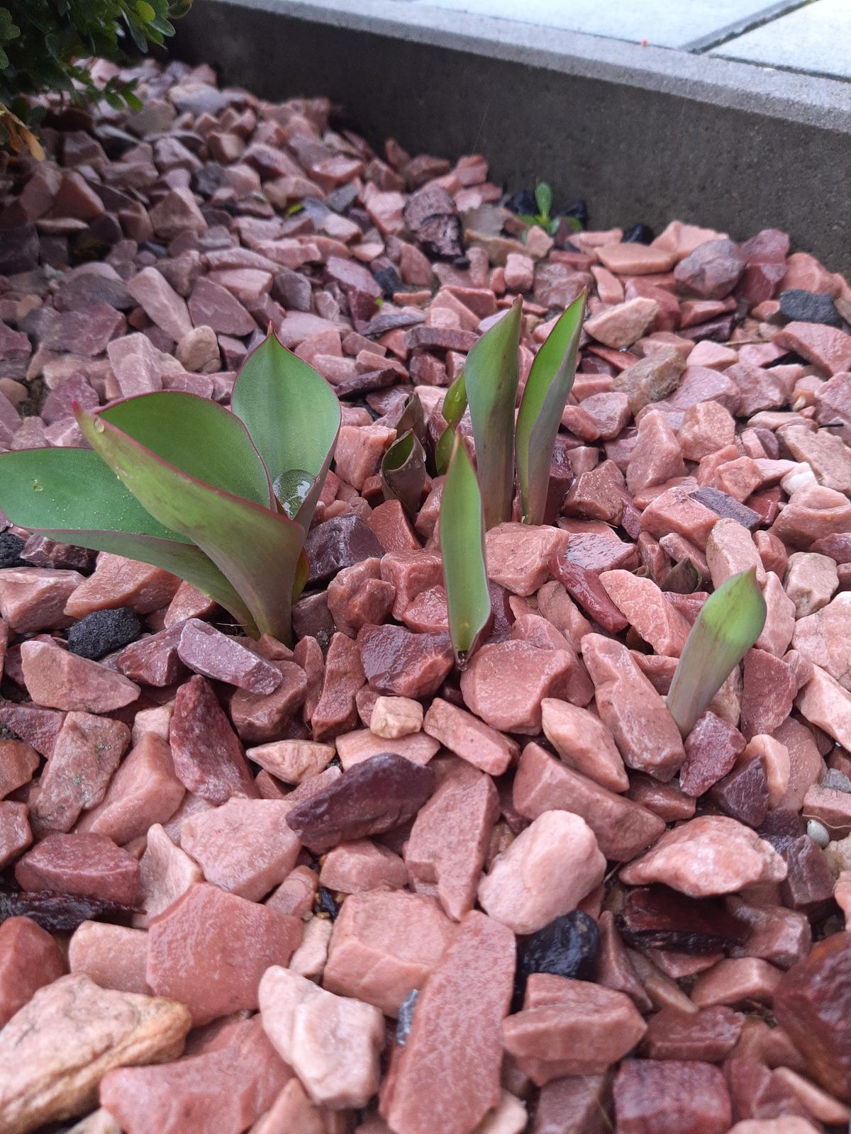 Domček na kopčeku - Konečne to začalo..... prichádza jar
