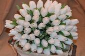 40cm Francúzske tulipány,