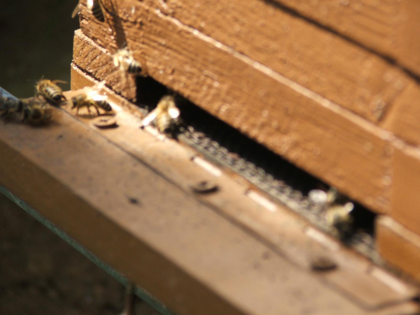 Tam kde si chodíme vyčistiť hlavu :) - včeličky naše ;-)
