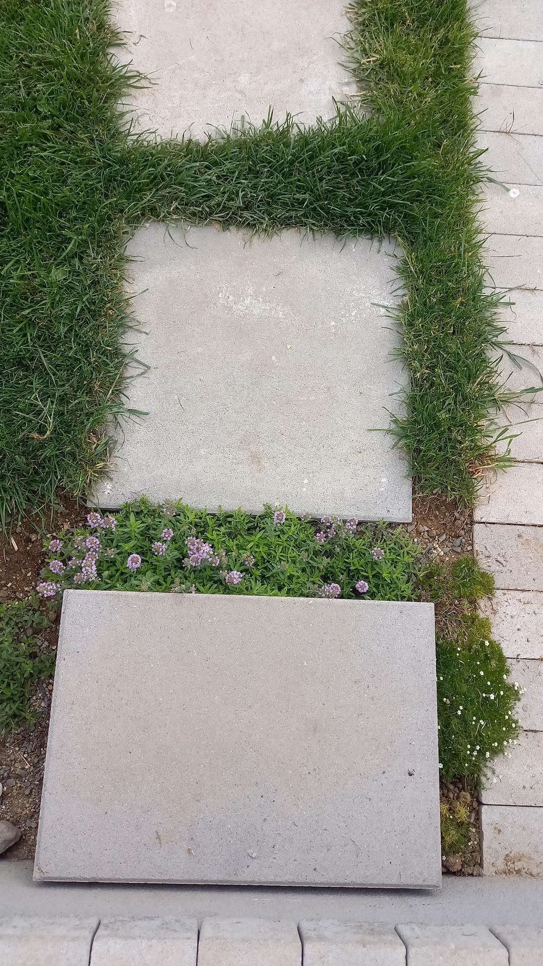Zahrada - Obrázok č. 2
