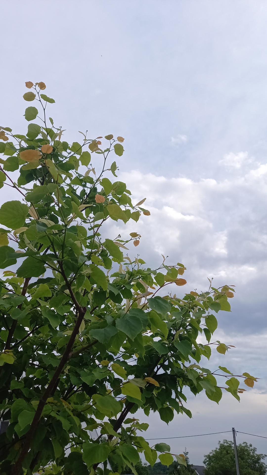 Zahrada - Lipka druhym rokom