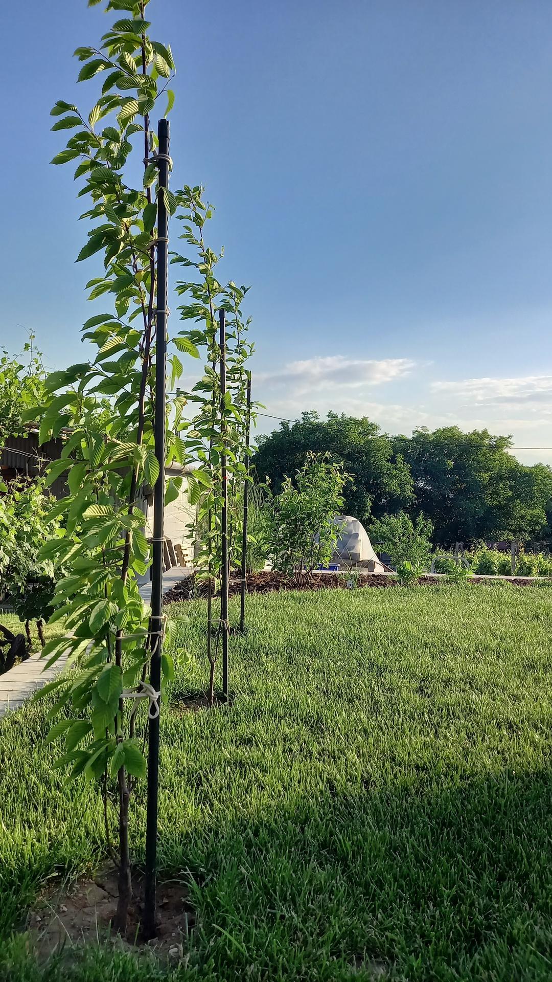Zahrada - 3 hrabiky,vzadu muchovniky