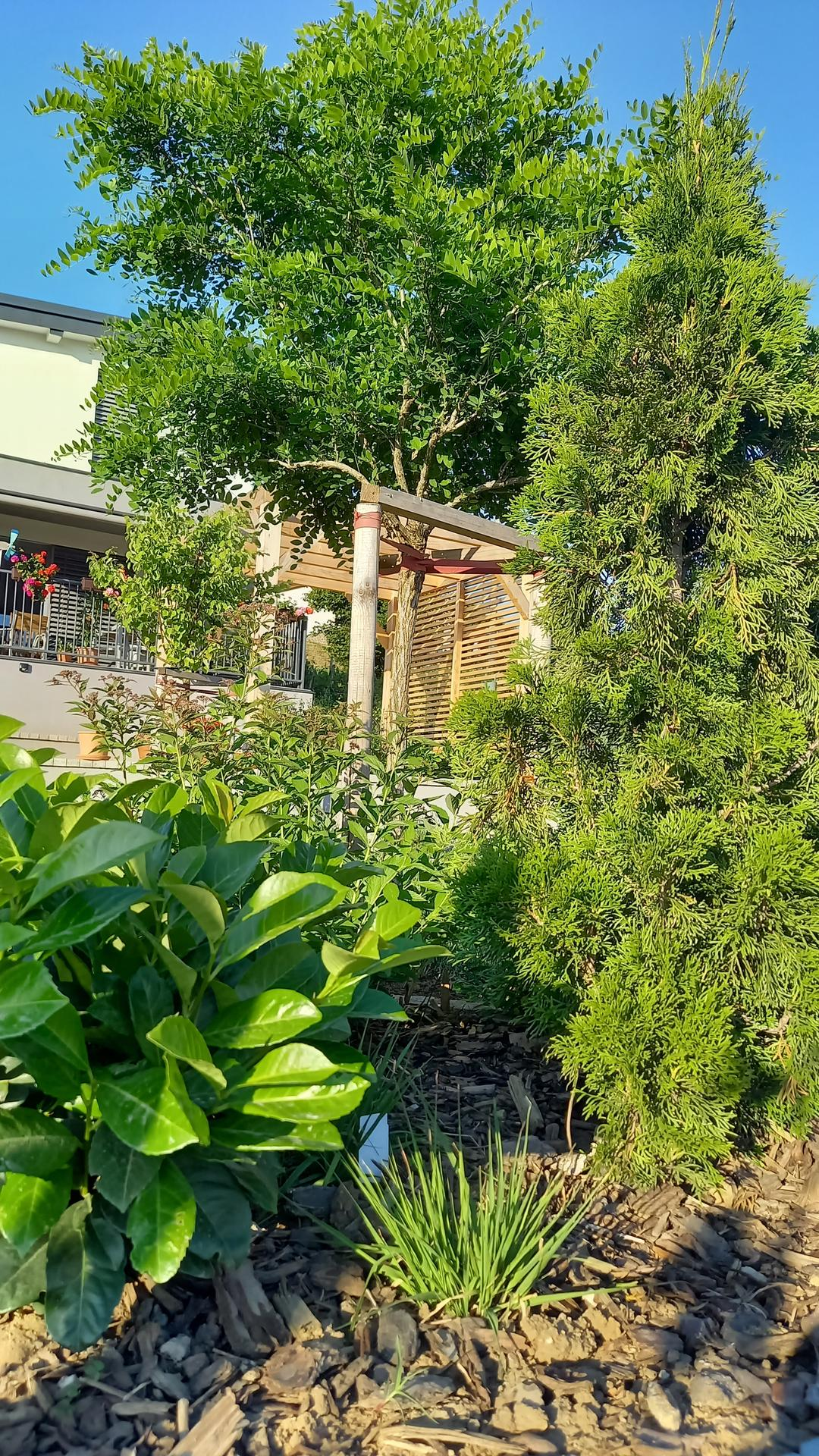 Zahrada - Jungle..agat,vavrinovec,tuja,tavolnik..