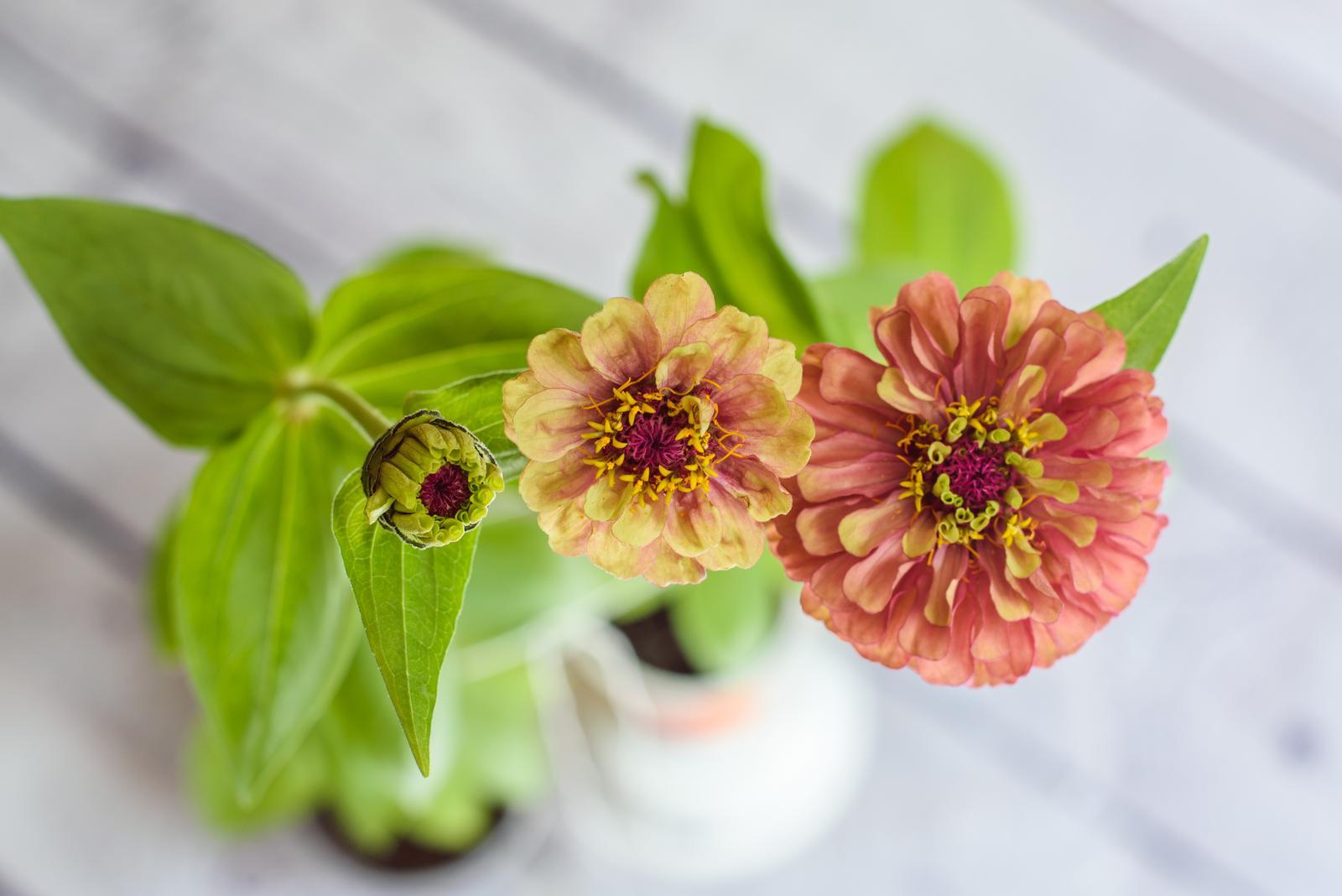 Vo víre kvetov... - Obrázok č. 45