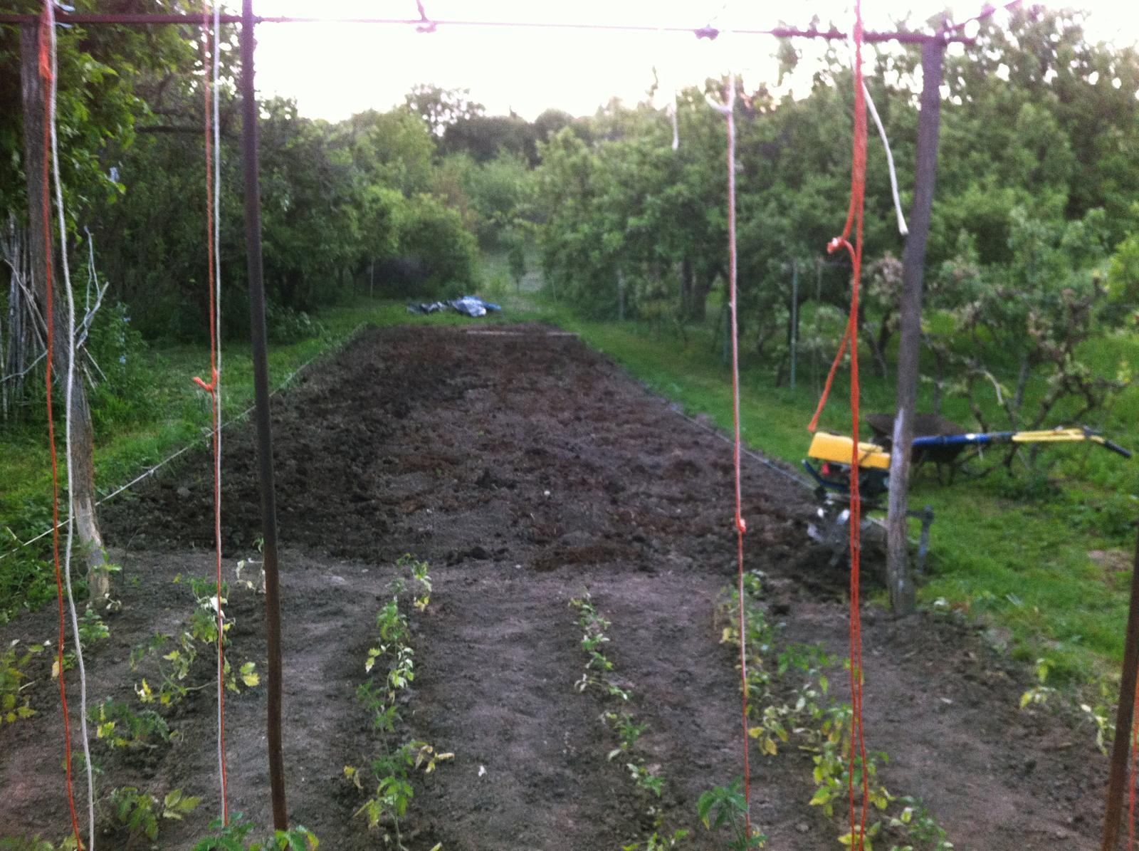 Vo víre kvetov... - 21 x 4 metre pôdy sa pripravuje na výsadbu - s pomocou môjho tatka a mamky. Celá táto plocha bude zakrytá agrofóliou. V tejto časti záhrady budem pestovať cínie