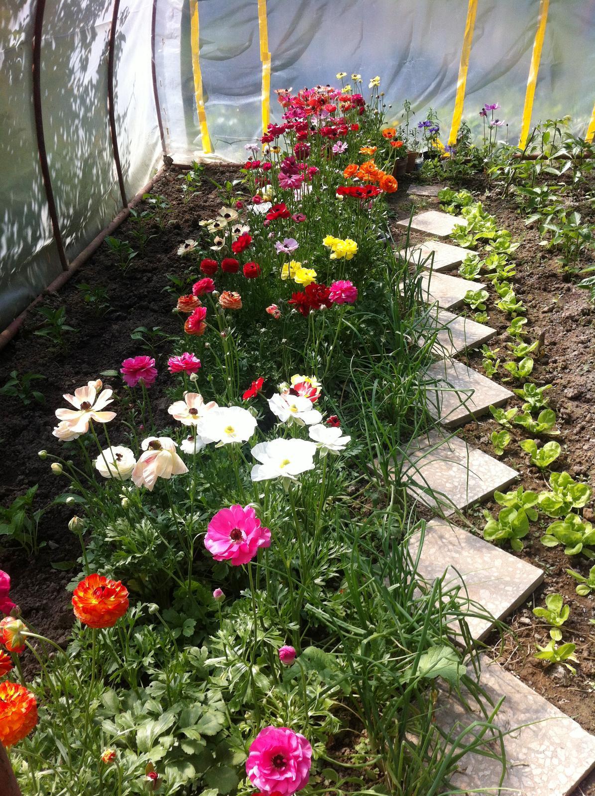 Vo víre kvetov... - Obrázok č. 66
