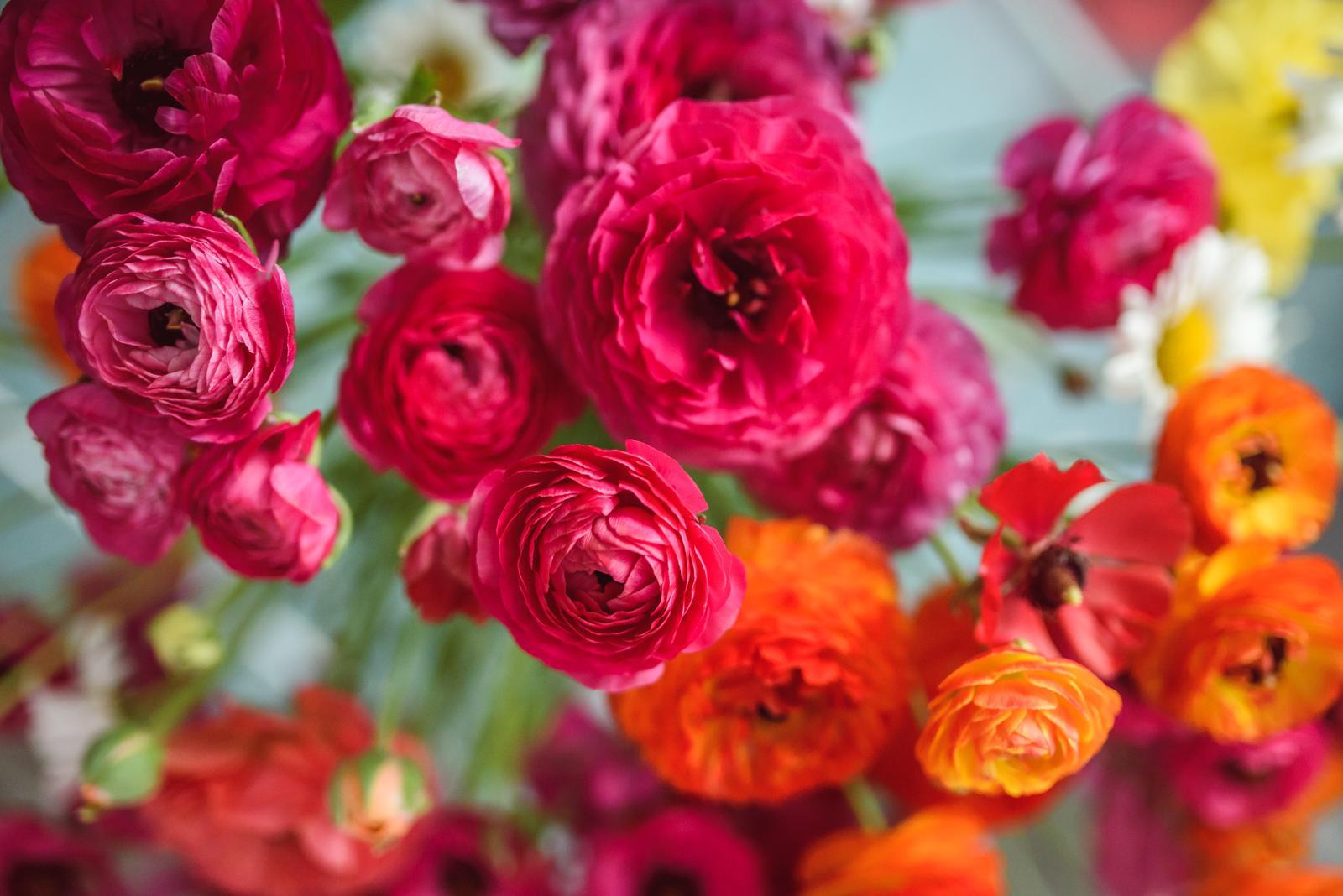 Vo víre kvetov... - Myslím, že sezóna ranunculusov (iskerníkov) vrcholí. :-) Keď budem mať dlhšiu voľnú chvíľu, určte napíšem také bohatšie zhrnutie o týchto kvietkoch, ich pestovaní a vhodnosti do svadobnej výzdoby - možete sa tešiť! :-)