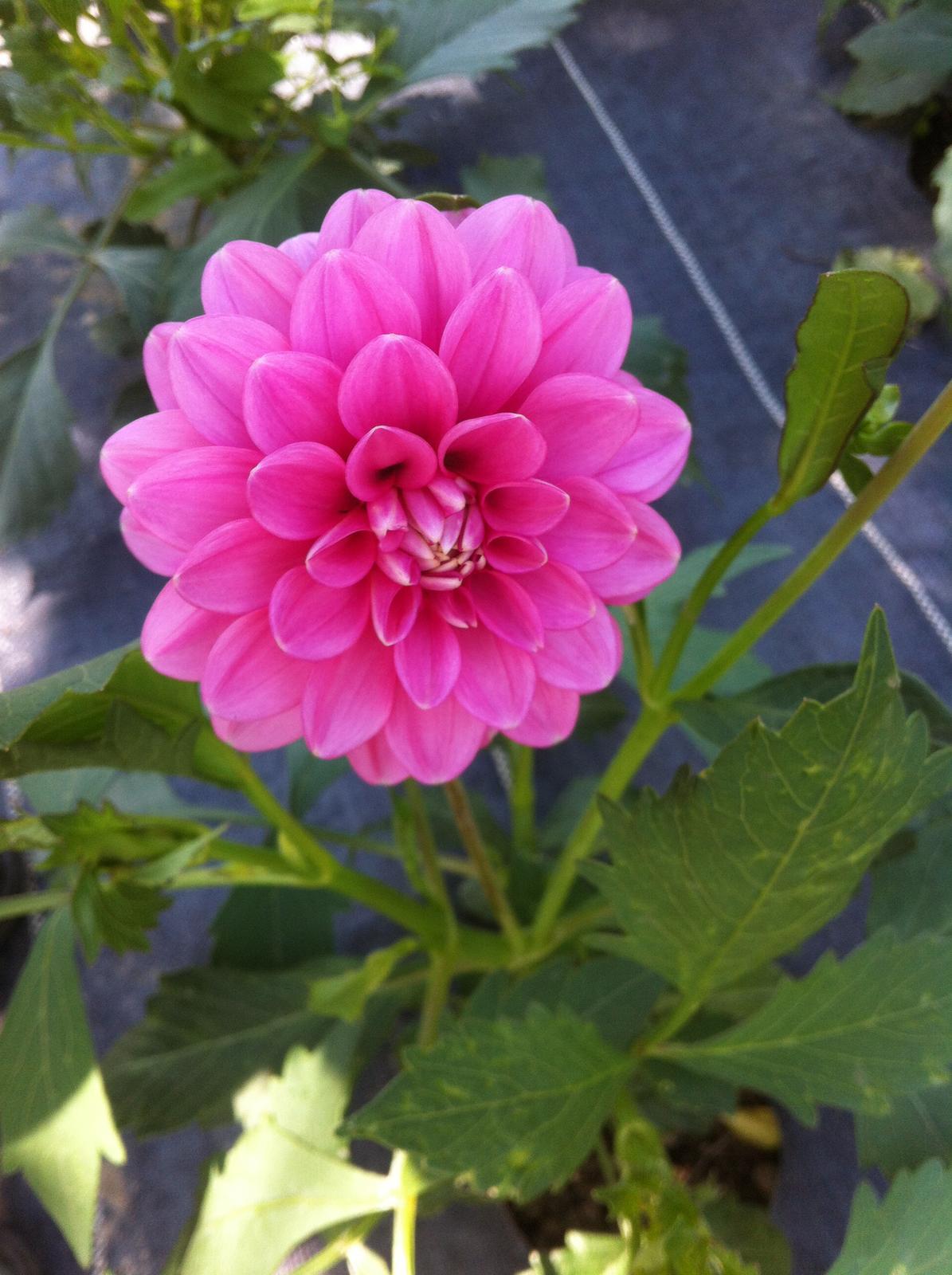 Vo víre kvetov... - Obrázok č. 76