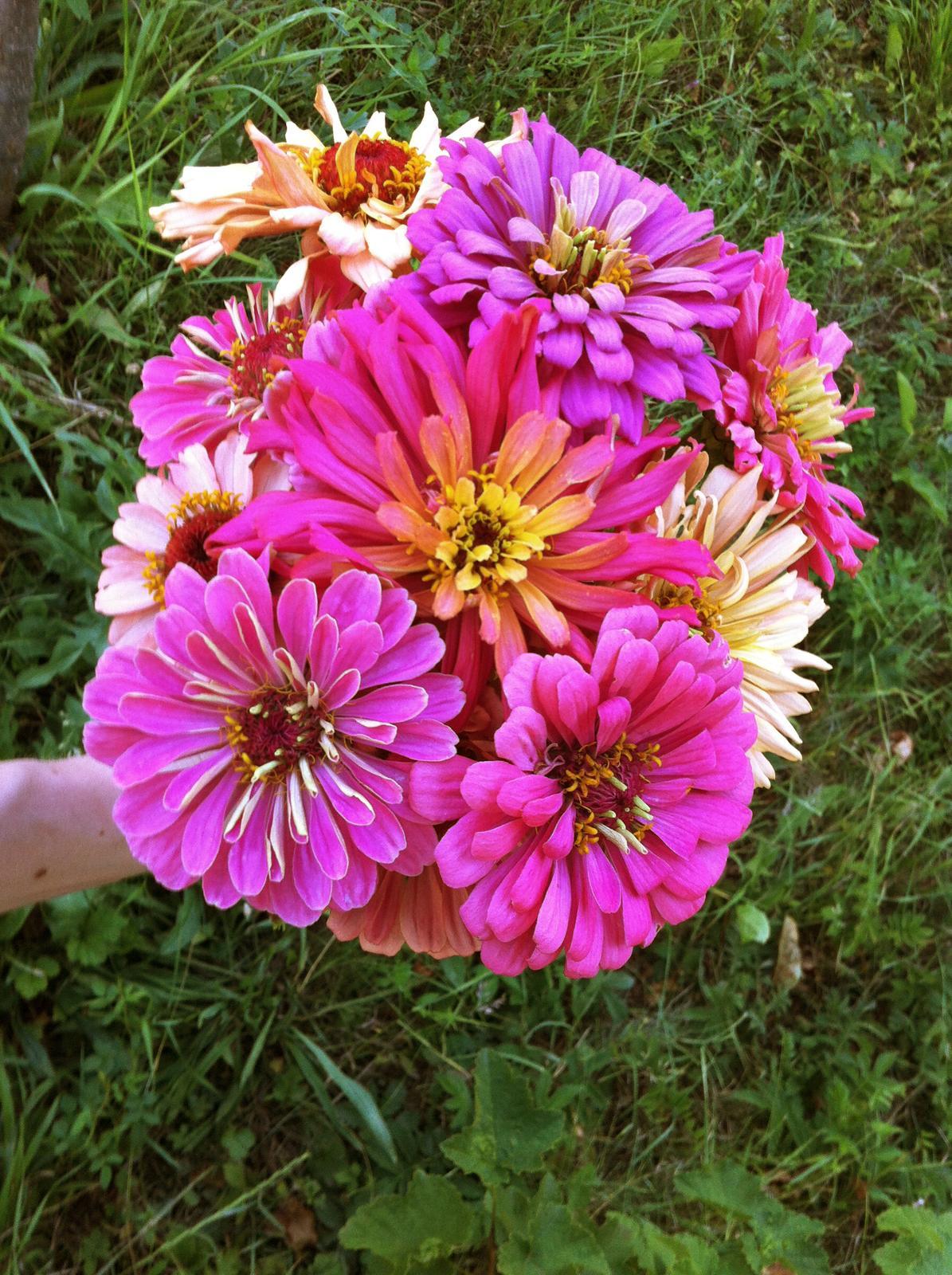 Vo víre kvetov... - Obrázok č. 73