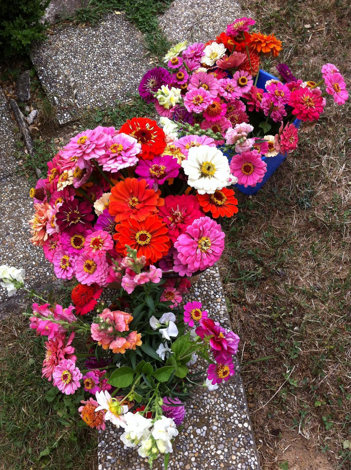 Vo víre kvetov... - Obrázok č. 88