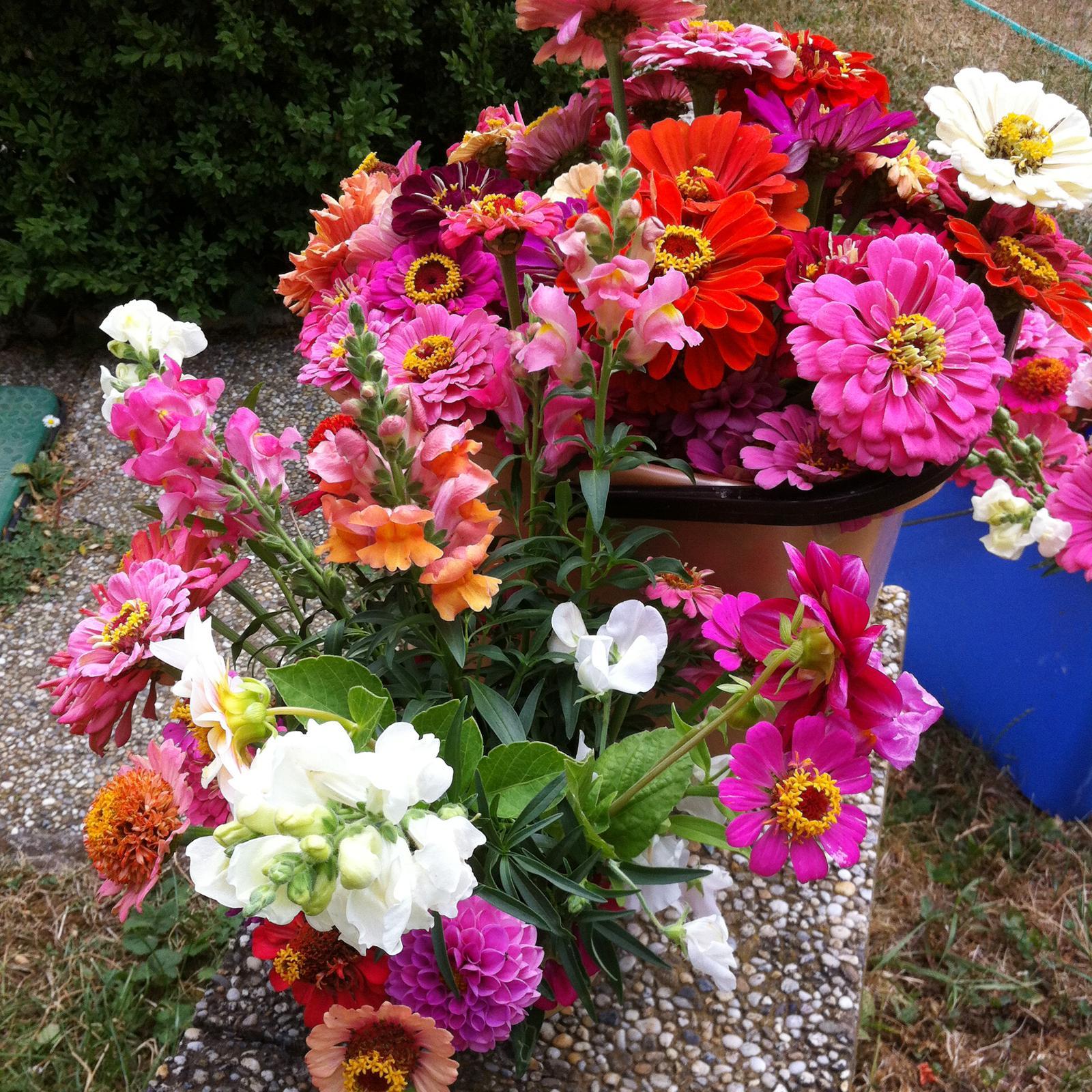 Vo víre kvetov... - Moje kvietky mali prvú oficiálnu premiéru - išli ozdobiť stoly na oslavu životného jubilea :) Tu čakajú na aranžovanie v kýblikoch