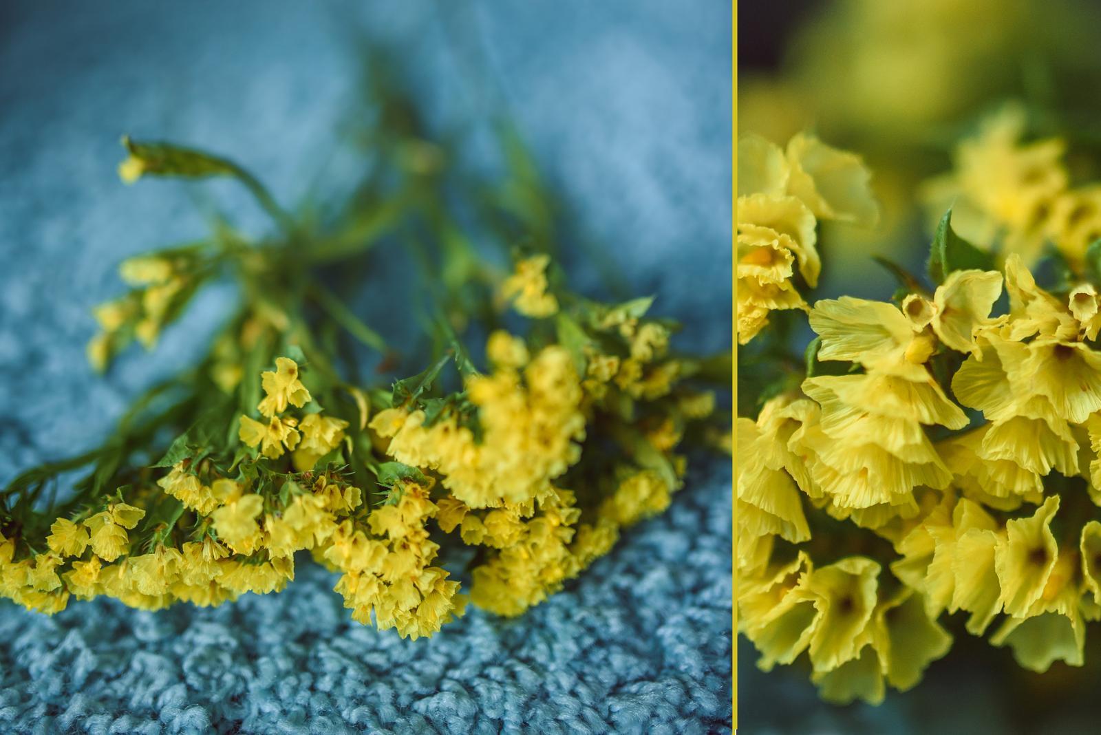 Vo víre kvetov... - Limonka na sušenie - ak jej vypestujem dostatok, možno z nej budú pierka pre svadobčanov. :-)