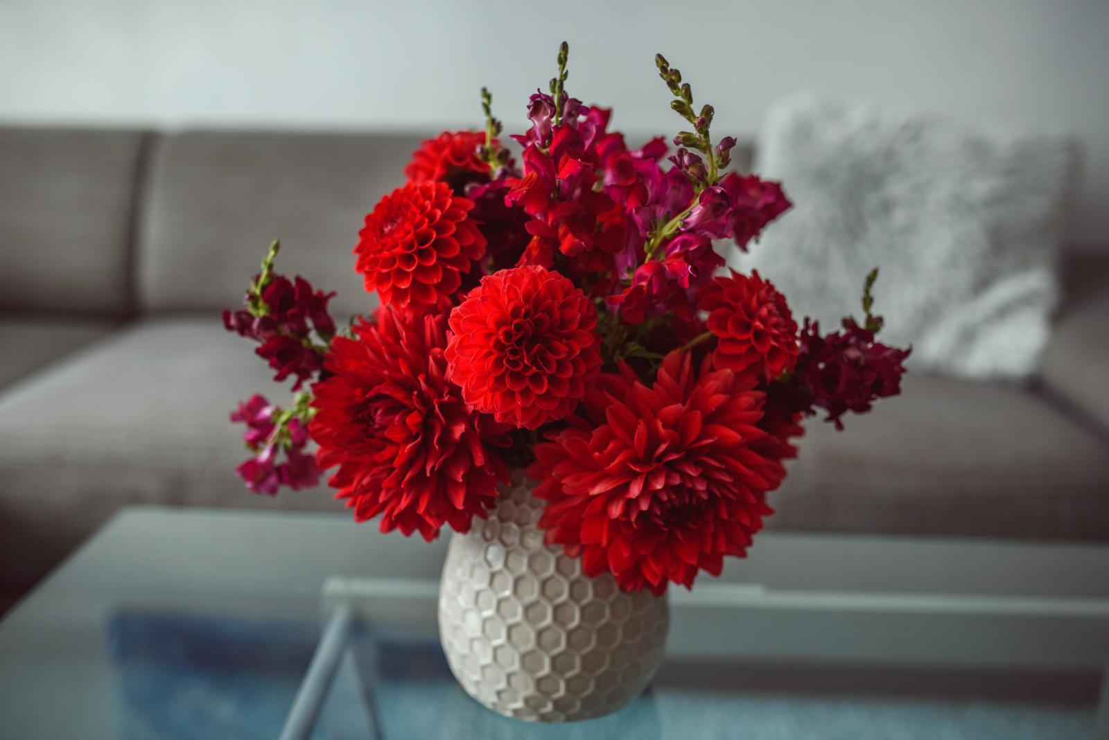 Moje kvetinové aranžmány - Dálie a papuľky - červená v červenom - klasika ako veľká kytica červených ruží. Tak krásne sfarbené zamatové lupienky, že sa ich chcem stále dotýkať :-D
