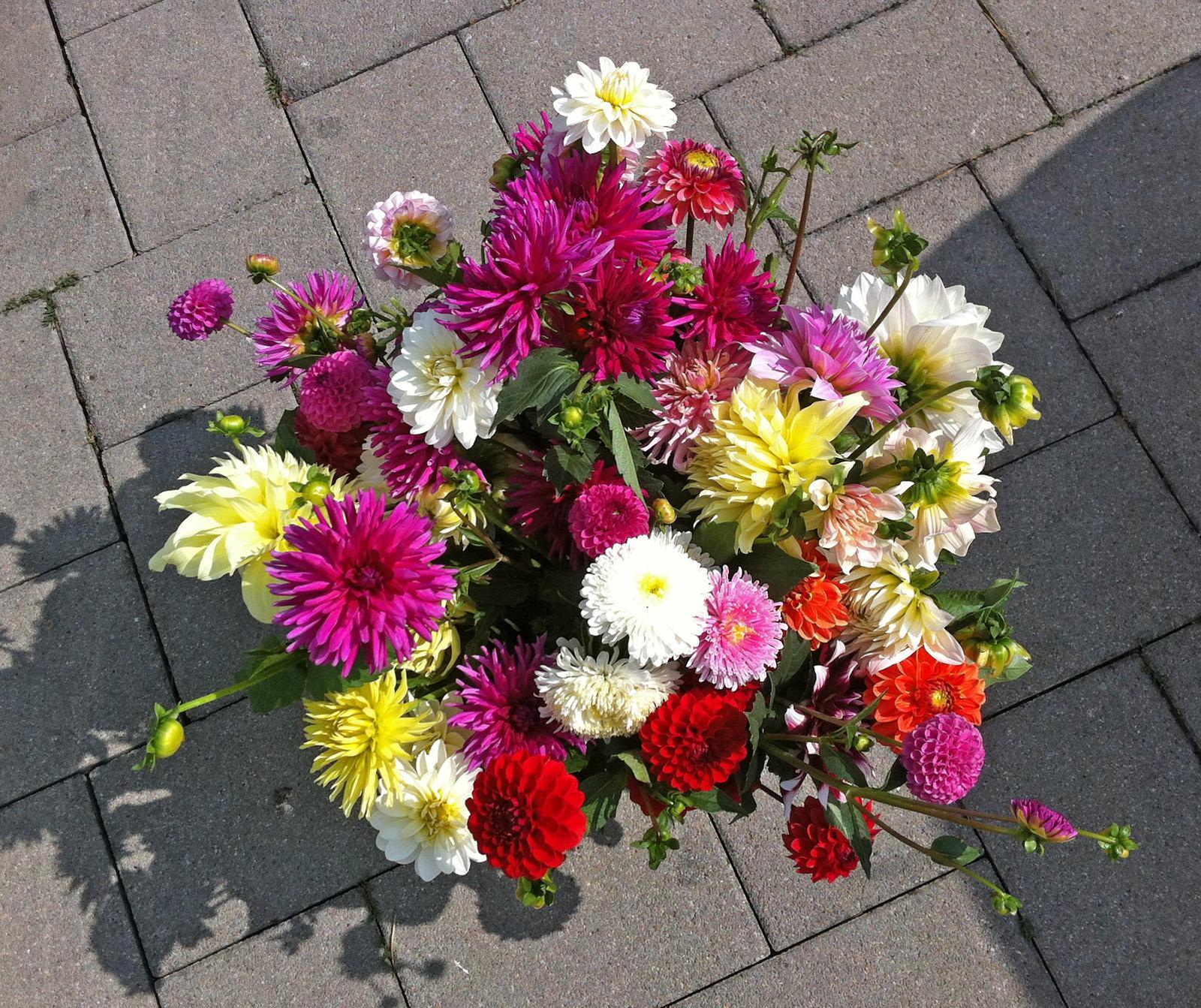Vo víre kvetov... - Obrázok č. 106